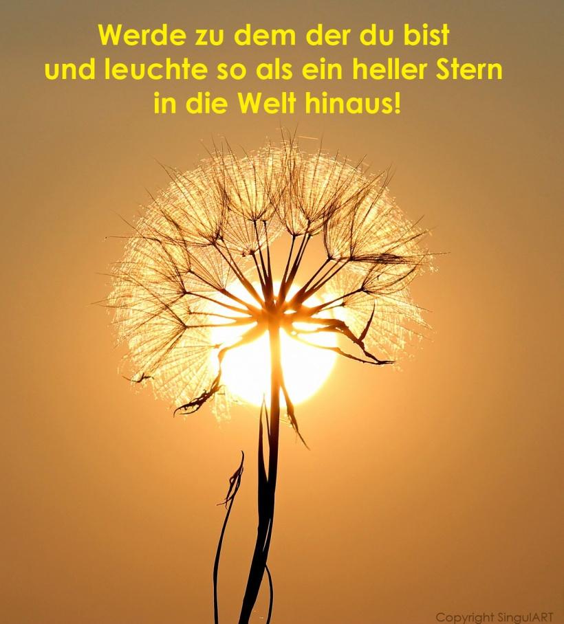 sonne-und-stern_1